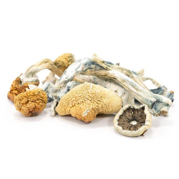 Blue Meanie Mushrooms 600x600 1