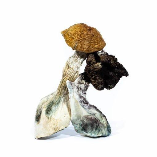 Zed Dried Mushroom min 510x510 1
